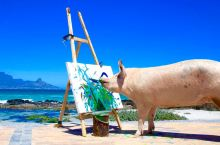 这是小猪加索!一只会画画的艺术猪,其作品最高卖到4000美金