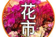 2019广州春节预告!灯光秀+逛花市+赏花灯指南拿走不谢!