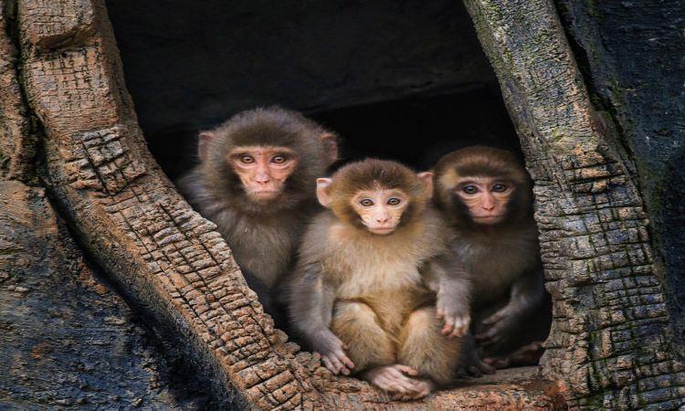 Ecology Zoo1