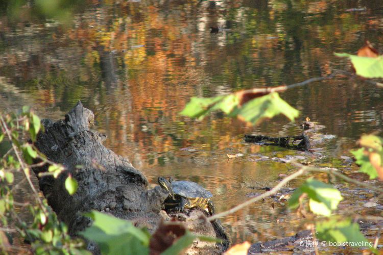 Turtle River State Park1