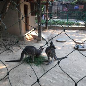 西双版纳热带动物园旅游景点攻略图