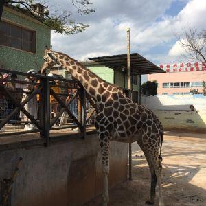昆明动物园旅游景点攻略图