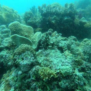 墨宝沙丁鱼风暴浮潜旅游景点攻略图