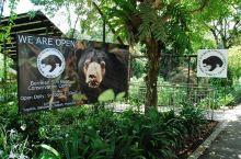 婆罗洲太阳熊保护中心 太阳熊保护中心是由个人发起的哦,中心于2008年设立,不但收留太阳熊,还会保育
