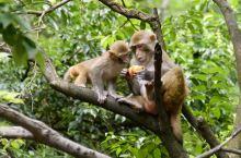贵阳黔灵山的猴趣