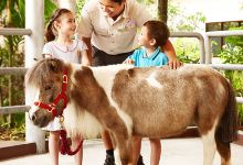 7日新加坡·三大动物园+环球影城+特色美食+艺术中心