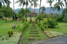 第825回:苏蛤坨家族打喷嚏,印度尼西亚患感冒