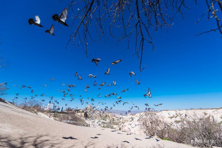 Pigeon Valley4
