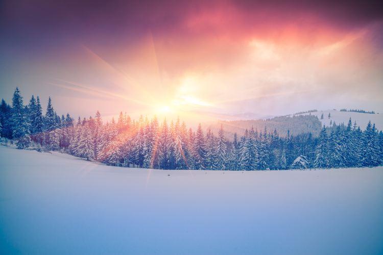 烏克蘭喀爾巴阡山脈原始毛櫸森林3
