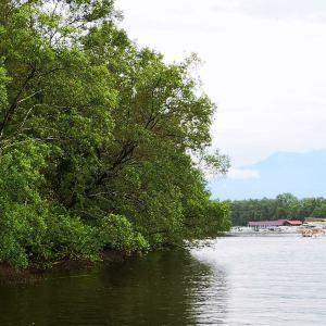 韦斯顿红树林旅游景点攻略图