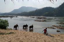 从清晨布施到给大象洗澡——琅勃拉邦的一天