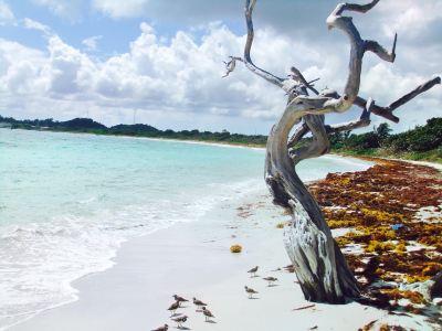 Jabberwock Beach