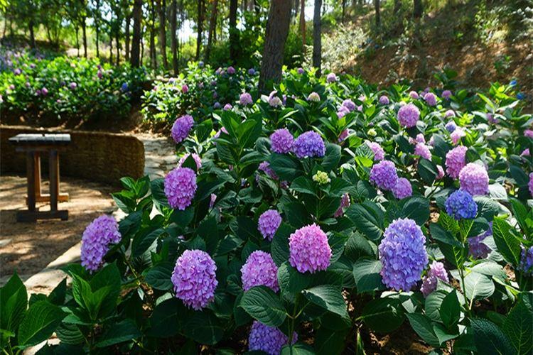 잉거스(영가석) 식물원4