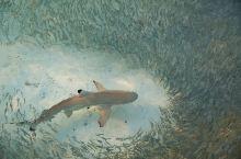 热浪岛七大浮潜地点,在这里仅仅带着浮潜面罩就能每天看到小鲨鱼