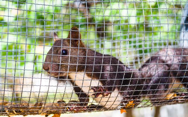 北京郊区动物园自驾游,喂小松鼠吃东西,萌翻了!