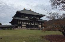 京都红叶行2