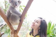 在悉尼和考拉袋鼠亲密接触!
