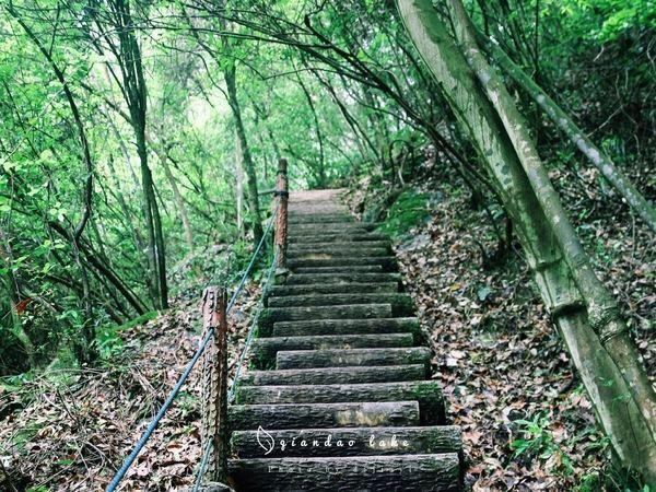 첸다오후 삼림산소방(천도호 삼림양파)2