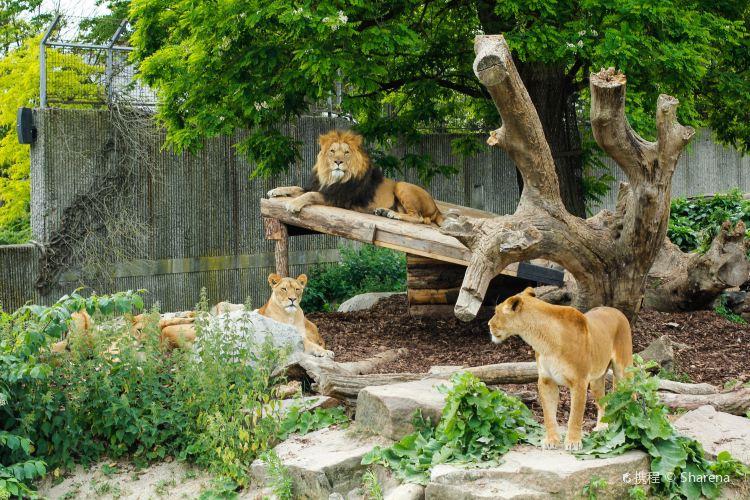 Copenhagen Zoo2