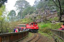 坐着小火车去阿里山看樱花