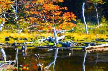 世界最南端风景如画的阿根廷火地岛公园