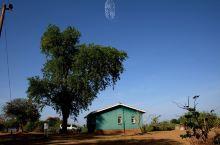大树和小房子