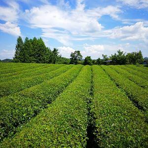 中国茶海景区旅游景点攻略图