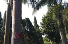 美丽的攀枝花,植物王国