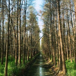 高邮湖湿地旅游景点攻略图
