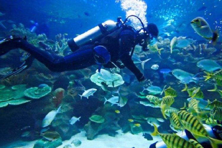 Zhongqian Diving World1