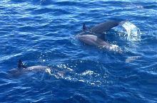 马代飞旋的海豚,可惜一瞬间,很不容易拍上
