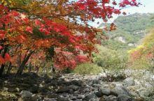东北的秋日  秋色 秋叶红如二月花 秋高色浓 秋水共色