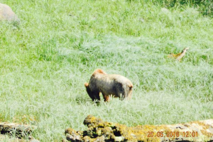 Khutzeymateen Grizzly Bear Sanctuary