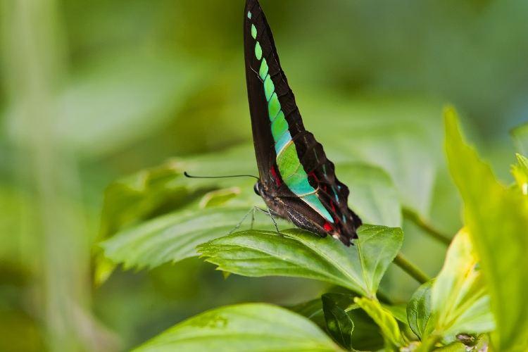 Kuala Lumpur Butterfly Park1
