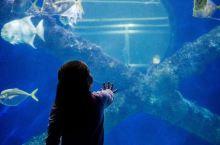 弗吉尼亚水族馆和海洋科学中心,海底奥秘了解一下?
