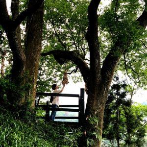薰衣草森林旅游景点攻略图