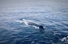 花莲赏鲸之旅