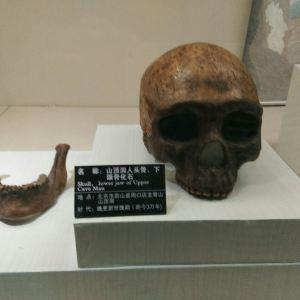 元谋猿人博物馆旅游景点攻略图