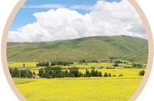 万亩油菜花在7月齐齐盛放,这里是四川春天最晚到来的地方!
