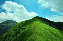 武功山高山草甸。