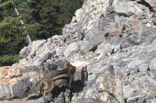 硫磺山上小松鼠