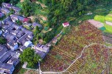古道配红枫、梯田镶花海、村庄藏洋楼,每年秋天才能等到全盛时期的她!