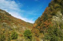 原生态彩林谷