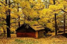 谁说广西没有秋天,这些美景惊呆我了!