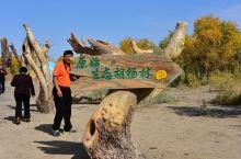 新疆生态胡杨林