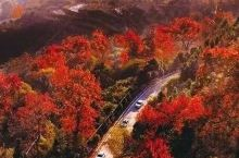 人民日报安利,浙江最美枫林古道惊艳全国!还有室内滑雪场让你提前过冬天