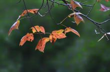梅岭,彩叶缤纷的时节