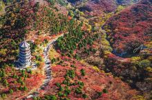 济南红叶谷的红色秋日
