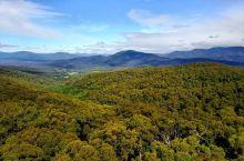 澳大利亚——原始森林自驾