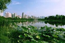 武汉市 沙湖公园